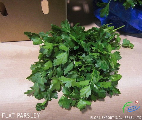Flat leaf parsley fresh herbs Israel