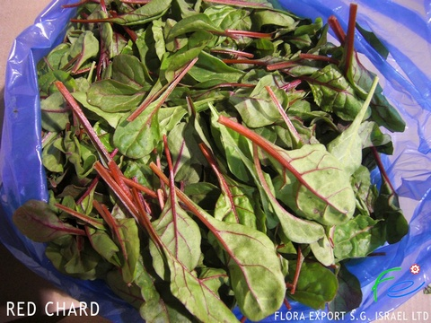Chard red fresh herbs Israel