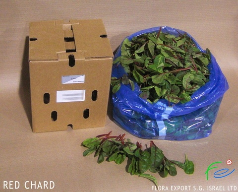 Red chard fresh herb